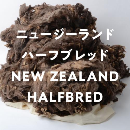 ニュージーランドハーフブレッド